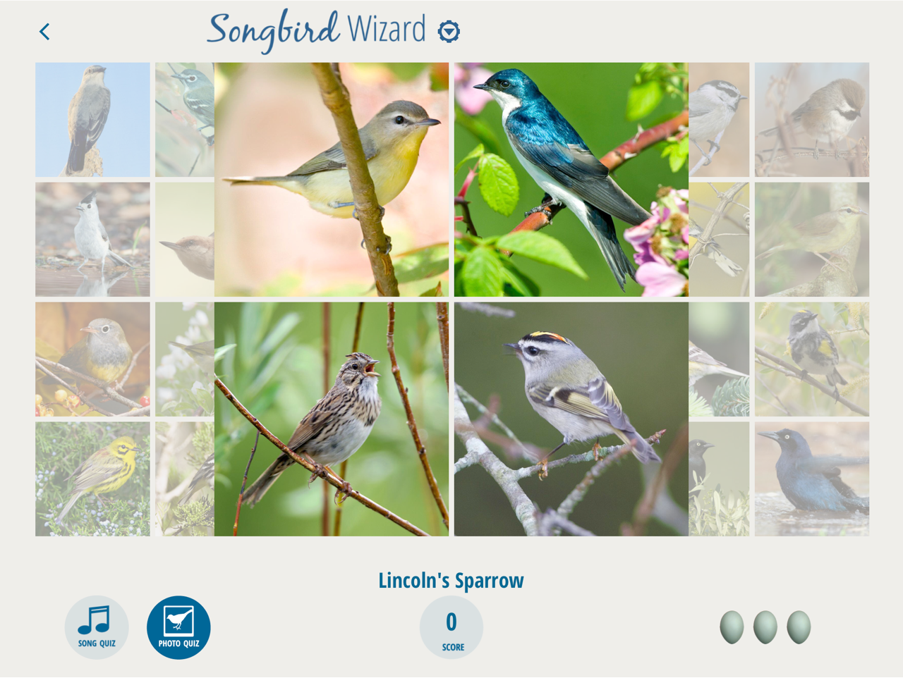 Songbirds App 4