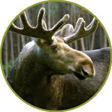 Vermont Mammals