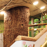 Forest Exhibit