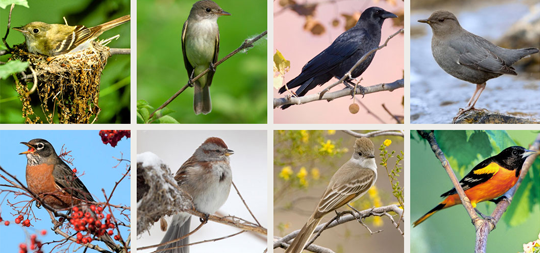 A Chorus of Songbirds - VINS App